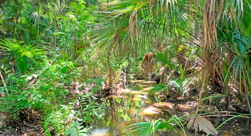 Canal amidst palm fronds