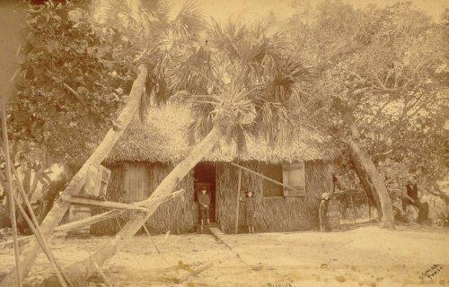 Pioneer Home built with palm fronds surrounded by palm trees.